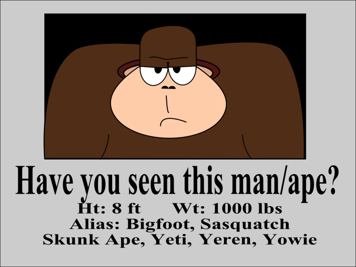 Many people are looking for Bigfoot, but what do you do if you see him?