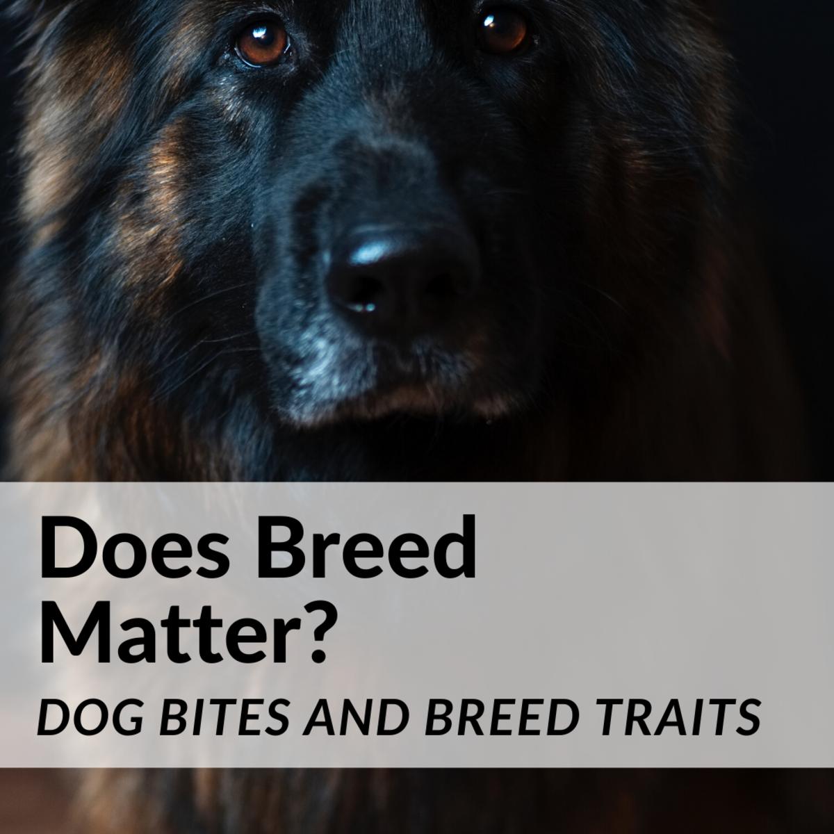 Breed Traits and Bite Statistics