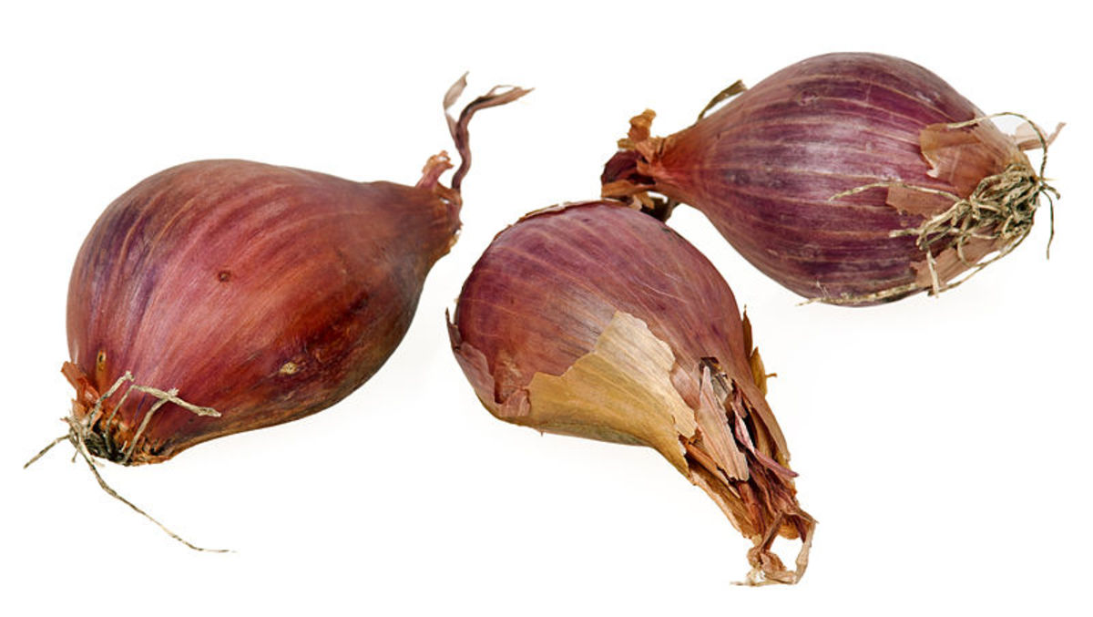 Shallot bulbs also called cloves like garlic.  Plant them with the roots downwards and the pointed end facing upwards.