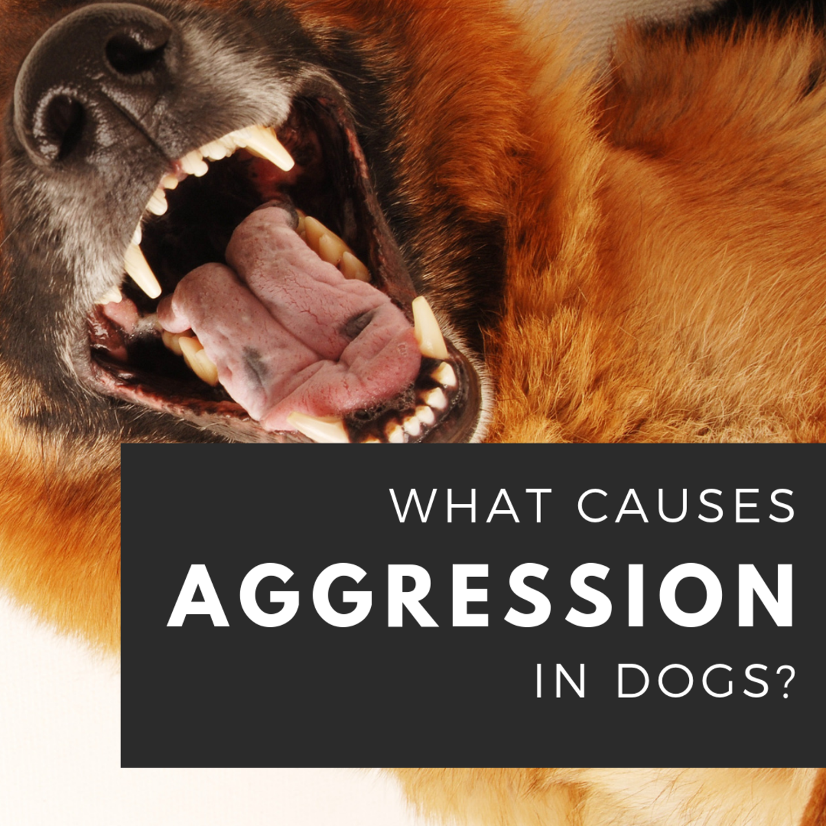 Causes of Aggression in Dogs