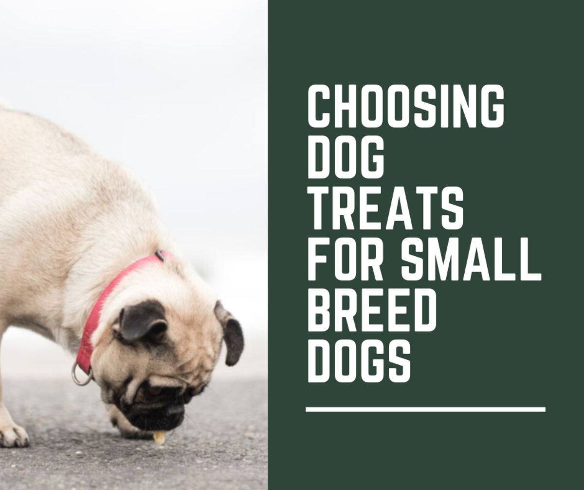 Learn how to choose the best dog food for your small dog.