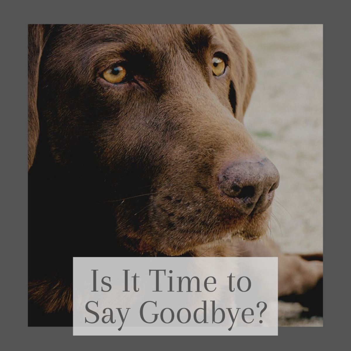 How Do I Know If It Is Time to Euthanize My Dog? An Interview With a Veterinarian