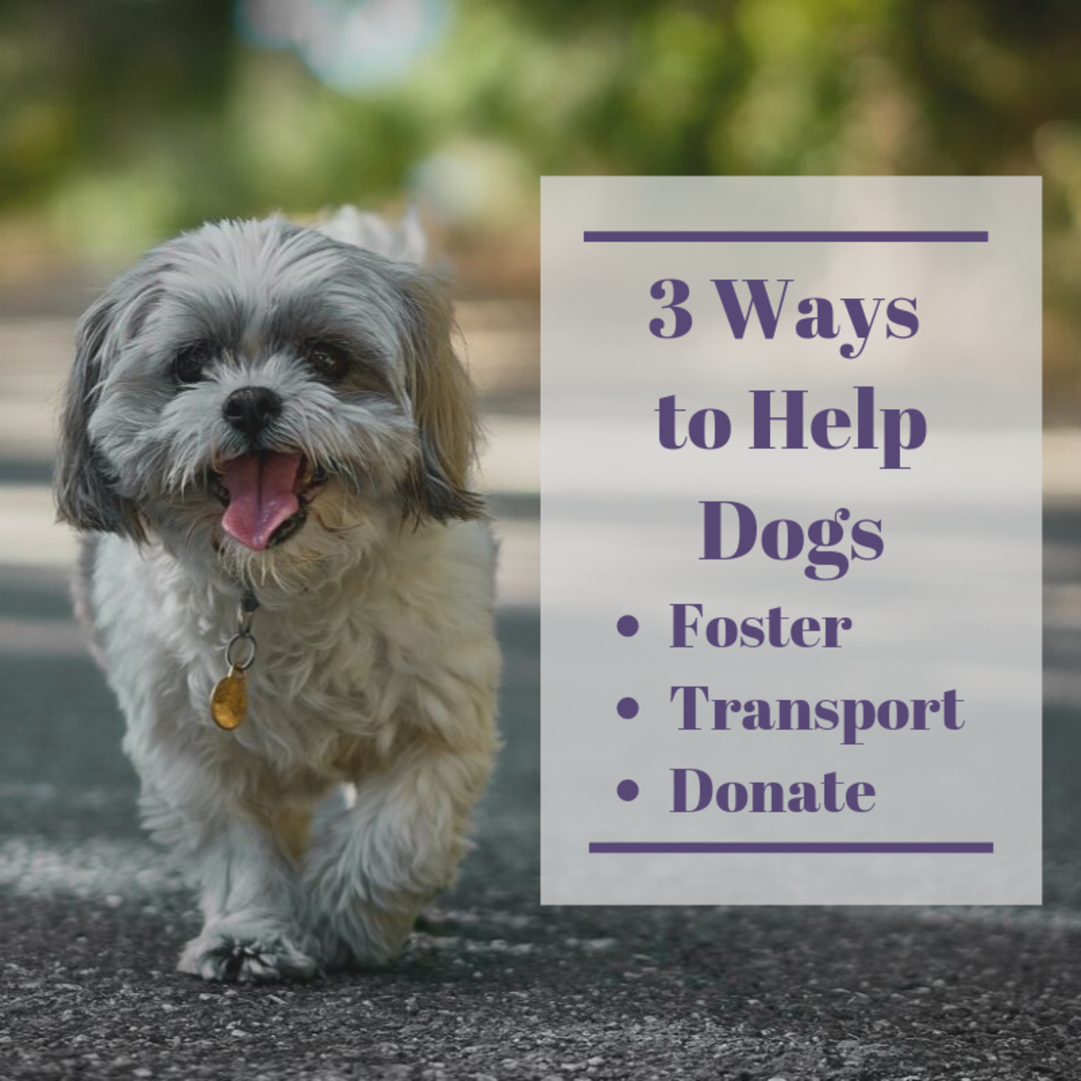 3 Ways to Help Rescue Dogs