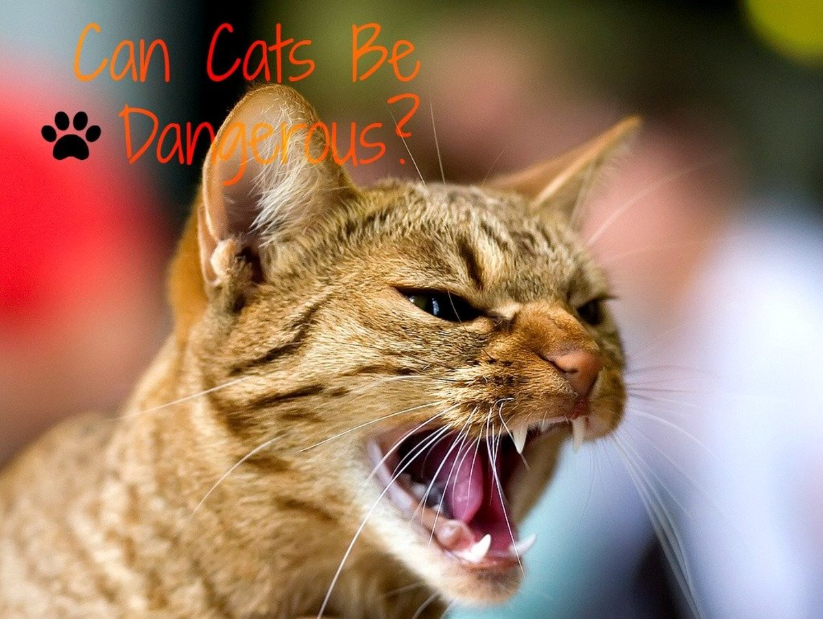 Why Do Pet Cats Attack Their Owners?