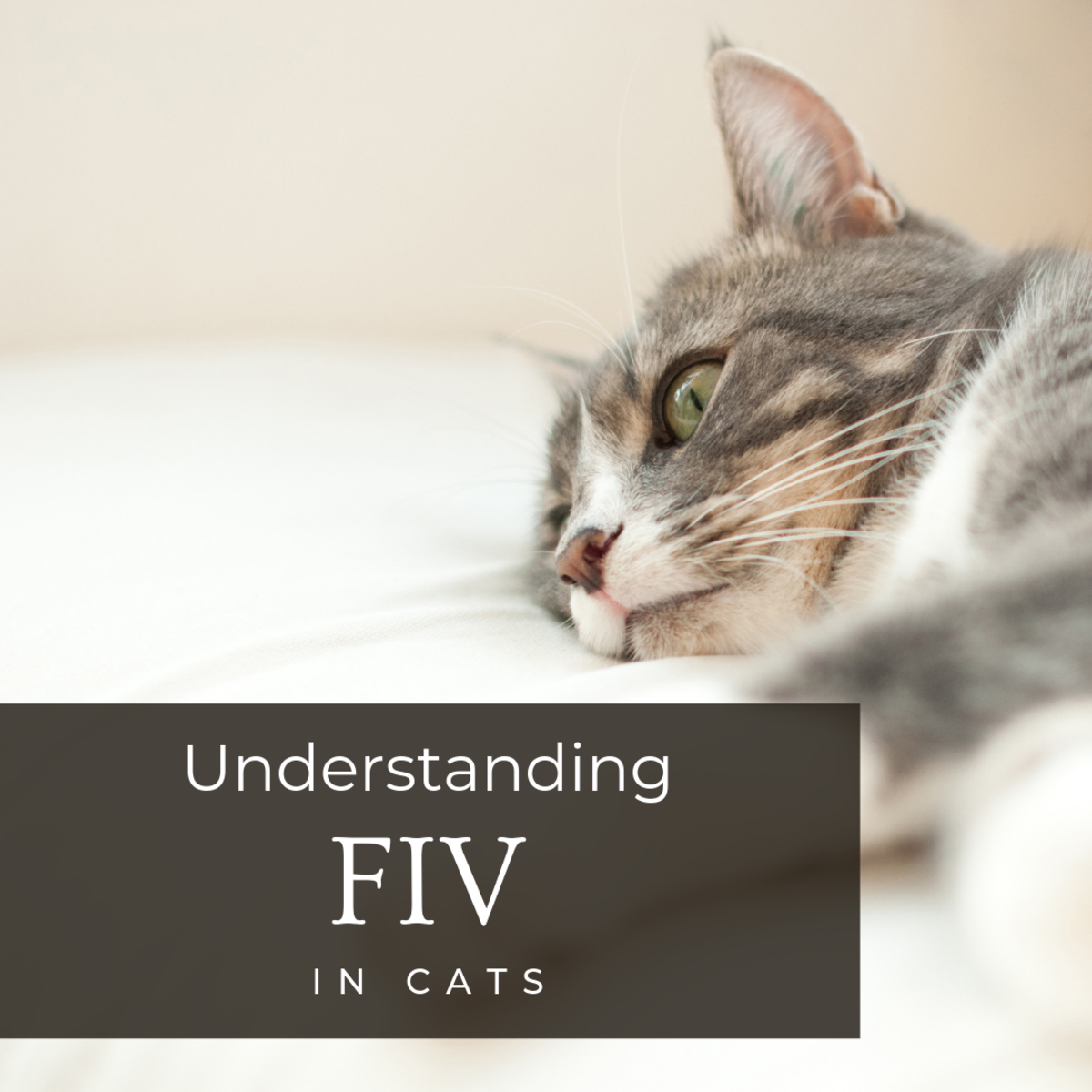 Feline Immunodeficiency Virus (FIV) in Cats