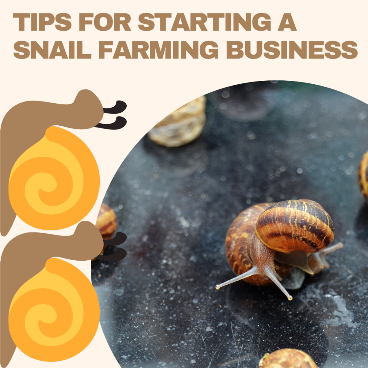Before you start a snail farming business, take these tips into consideration.