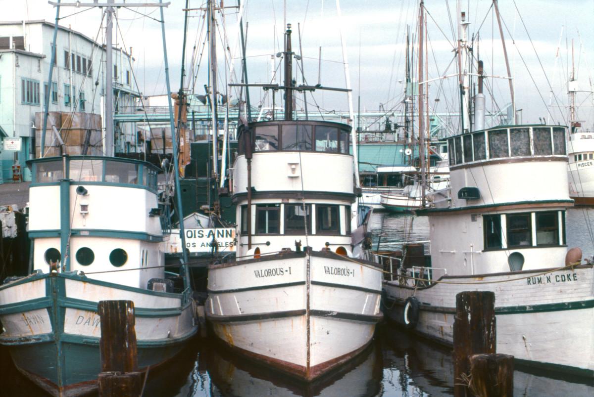 fishing-job-realities