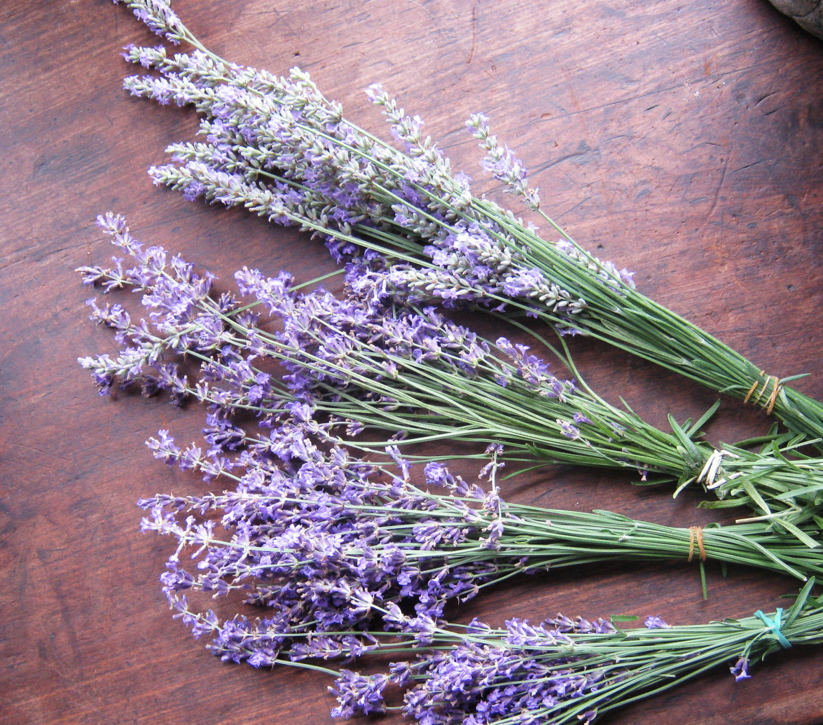 Bunch lavender and hang in a dark, dry place to dry