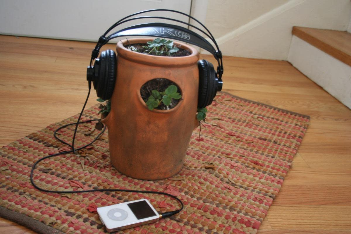 The Effect of Music on Plant Growth and Pests
