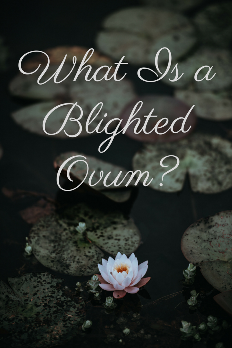 So You've Been Told You Have a Blighted Ovum