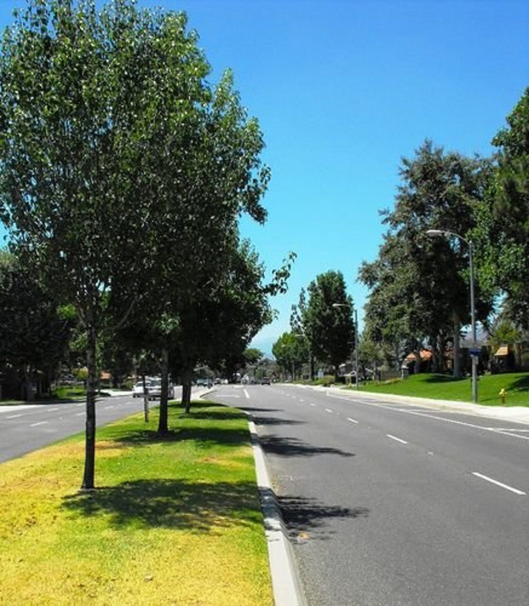Starting in the late seventies, the city added trees to almost every boulevard.