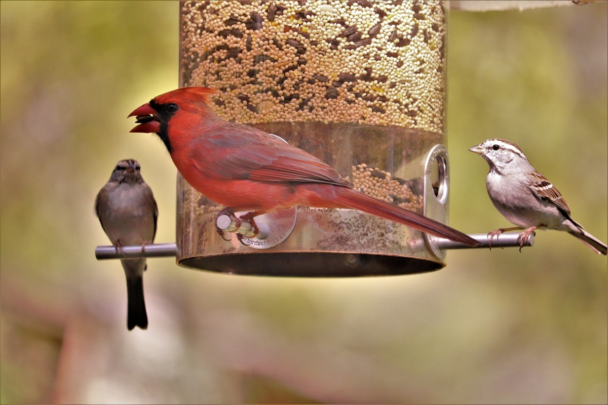 Different types of seed will attract different species of birds.