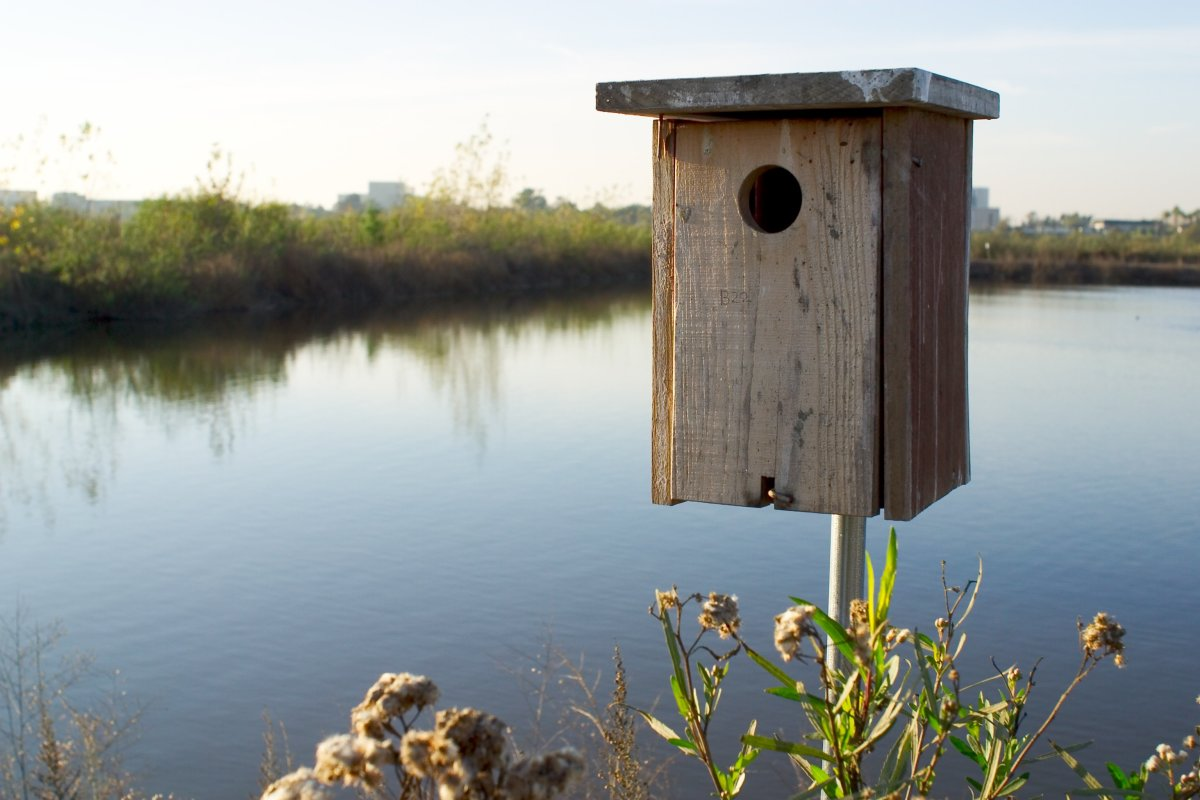 How to build a wood duck nest box feltmagnet for Build your own duck house
