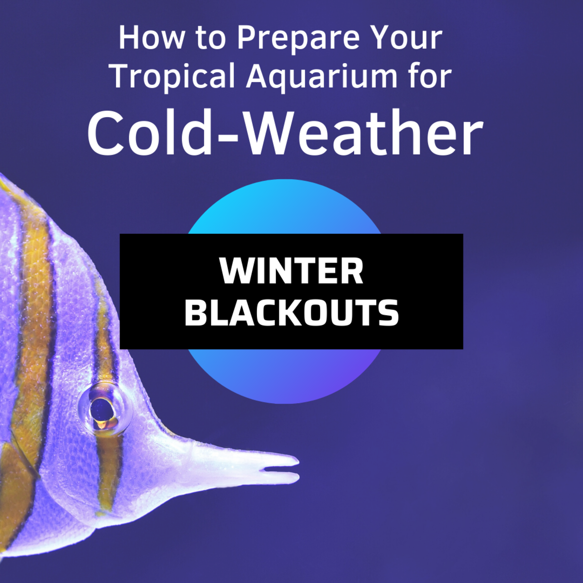 How to Prepare a Tropical Aquarium for Winter Blackouts