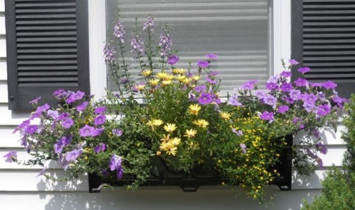 My-summer-window-box