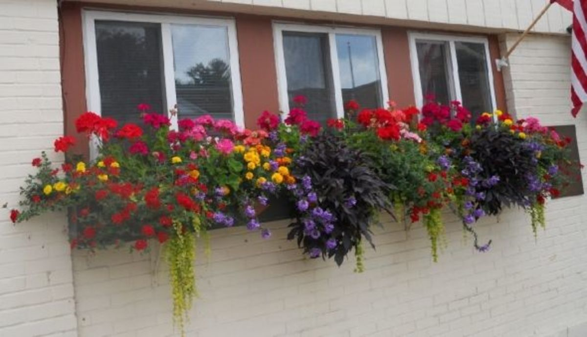 Colorful-window-box