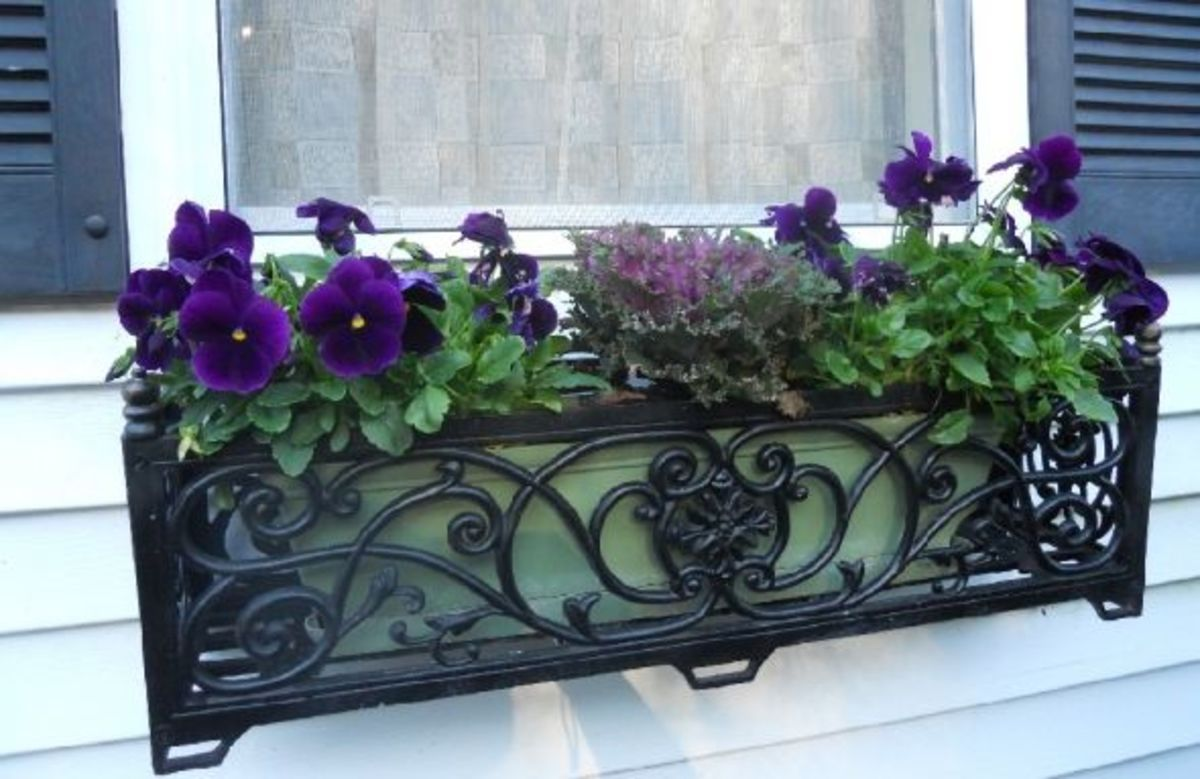 My-window-box-in-fall