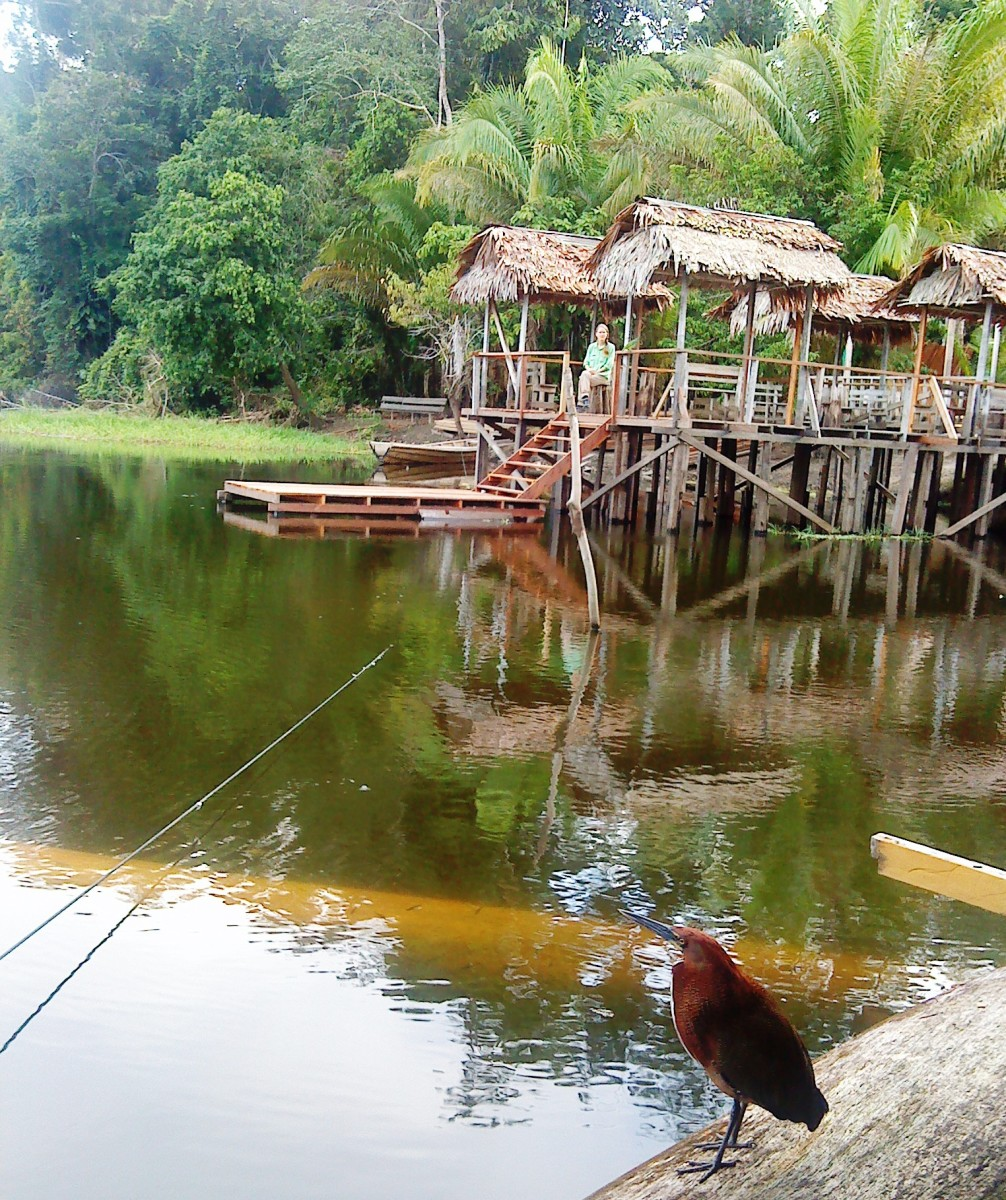 How to Book Your Amazon Rainforest Tour - Marasha Nature Reserve