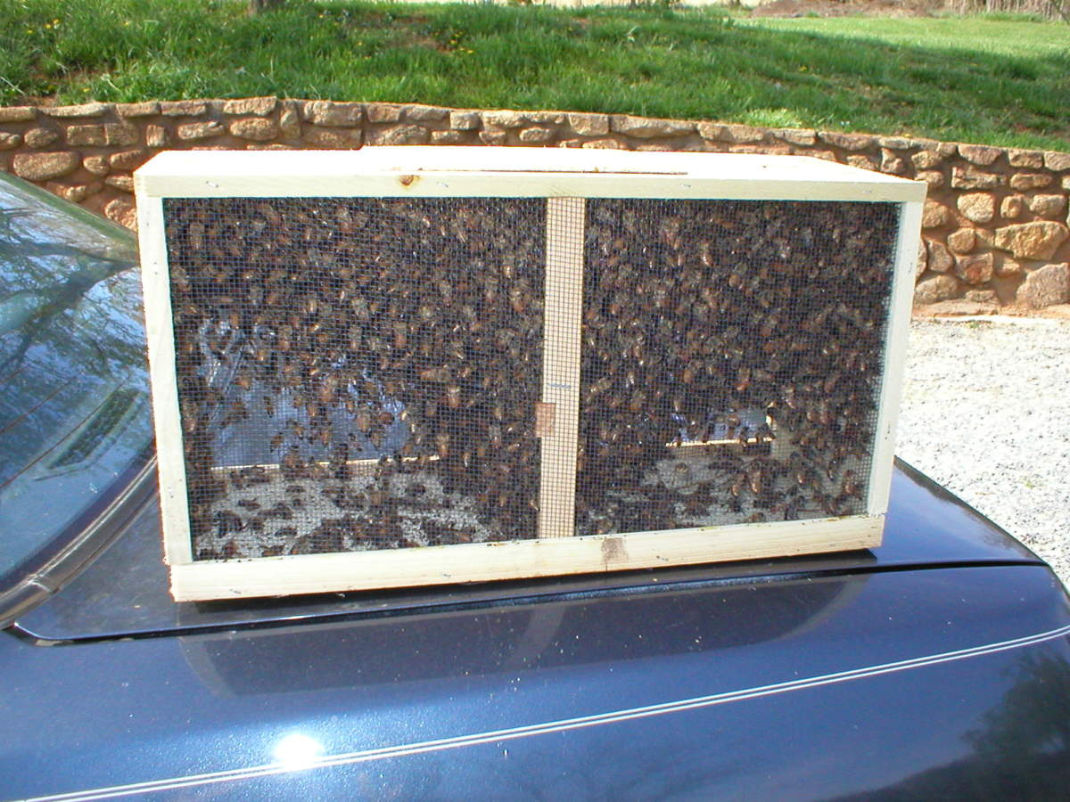 Part of a beekeeper's beehive.