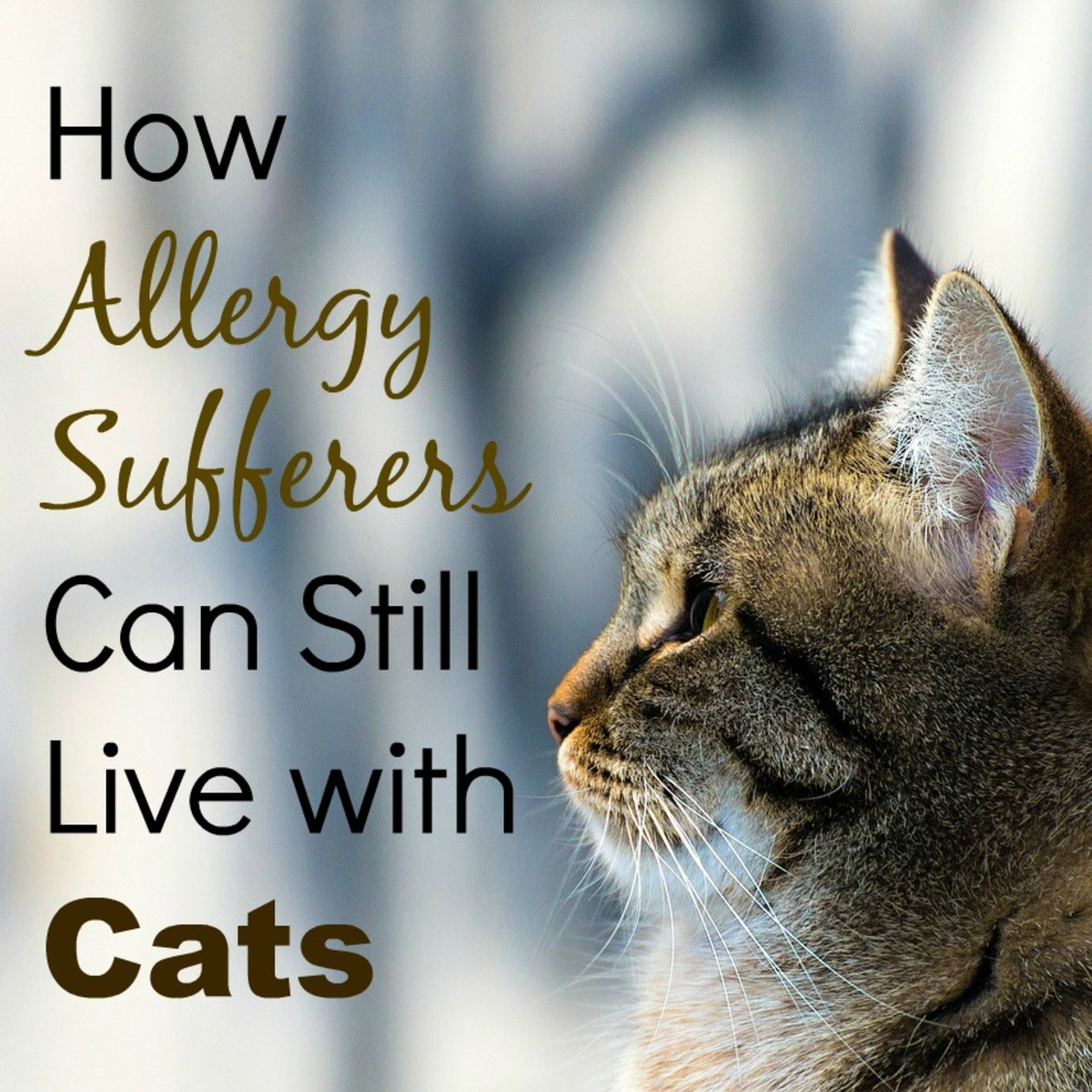 Do you have cat allergies? Don't despair just yet. You don't have to give up your dream of having your own furry friend!