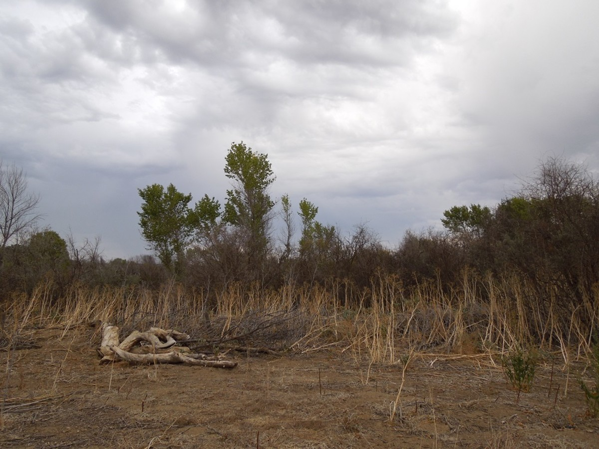 Dry Landscape in Local Park