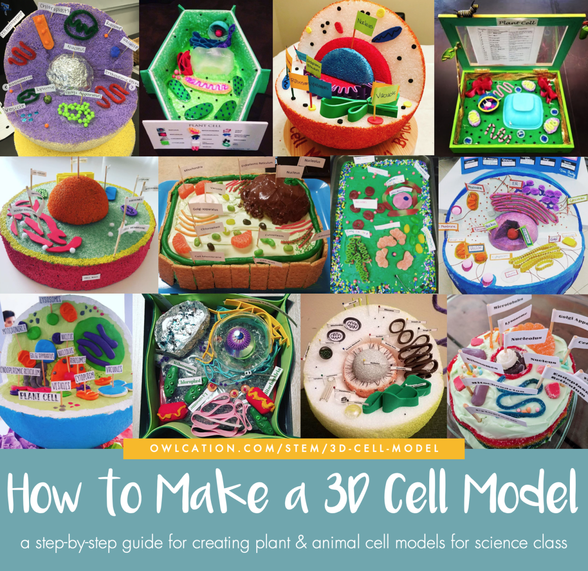 A step-by-step tutorial for creating 3D plant and animal cell models.