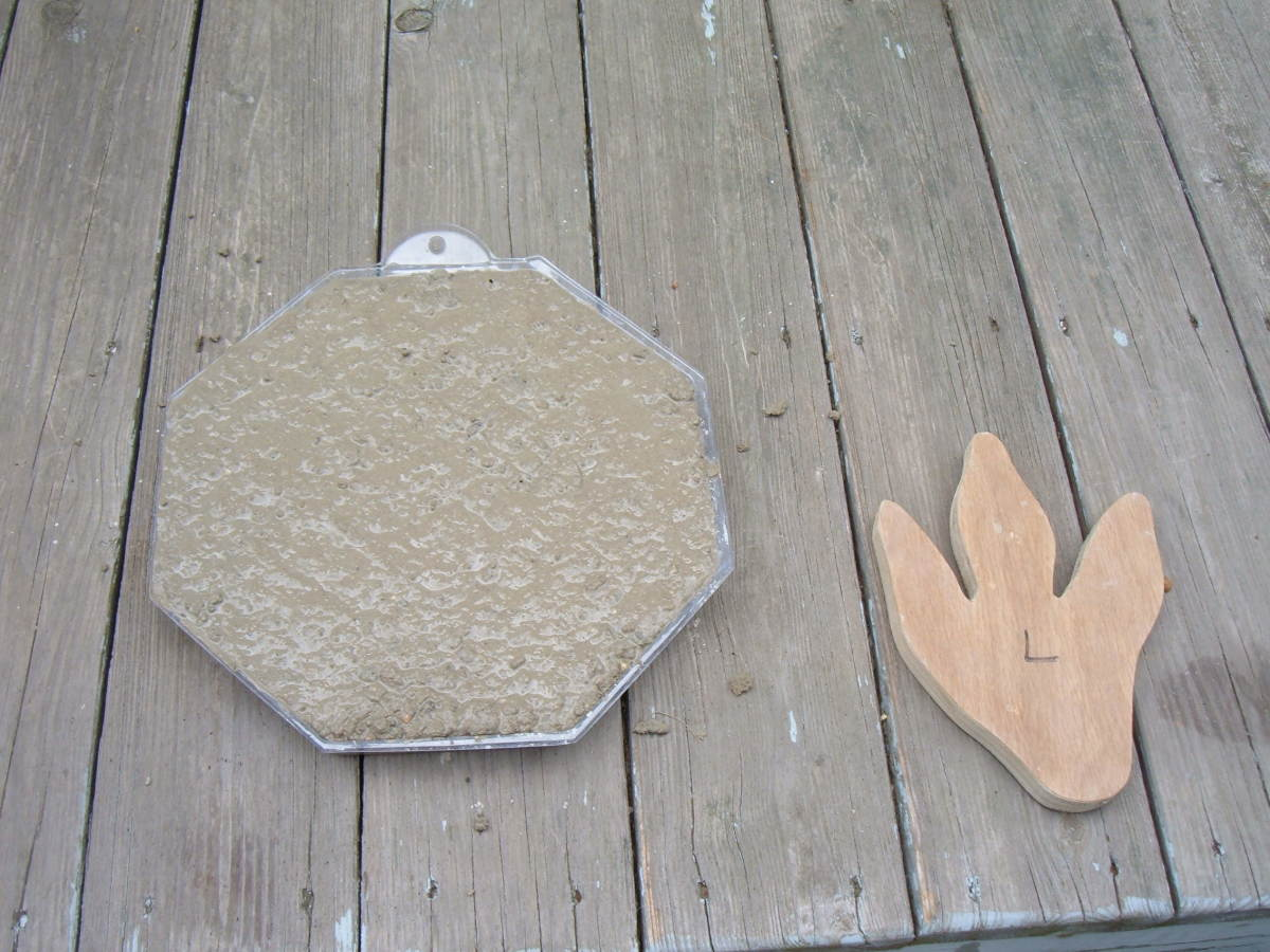 Concrete mold and T-Rex form