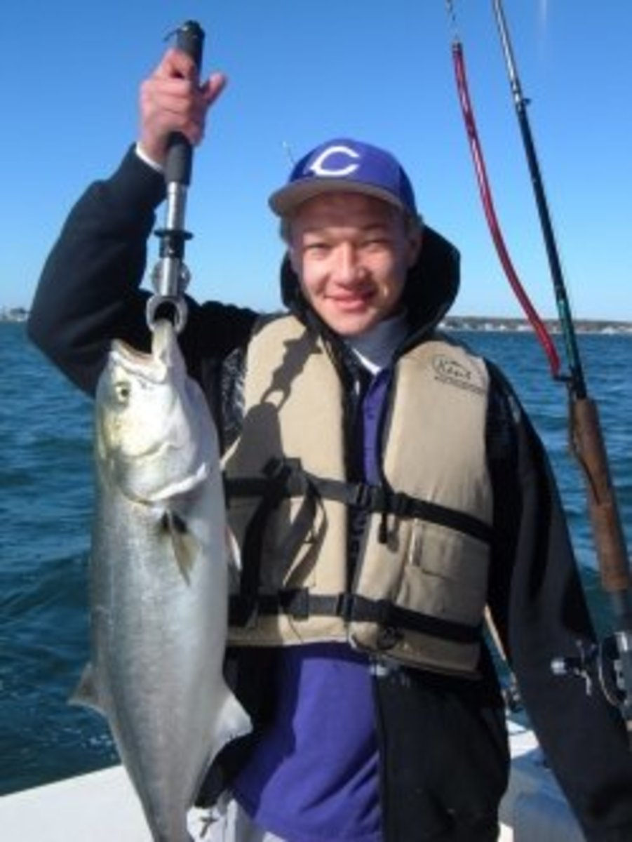 Bluefish caught on a Tube and a Worm