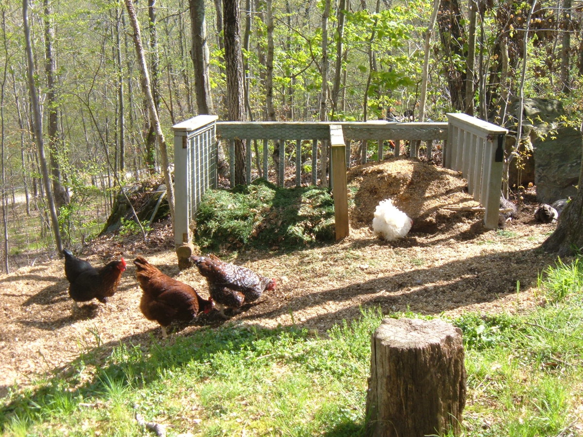 Our chickens help to aerate the compost piles.