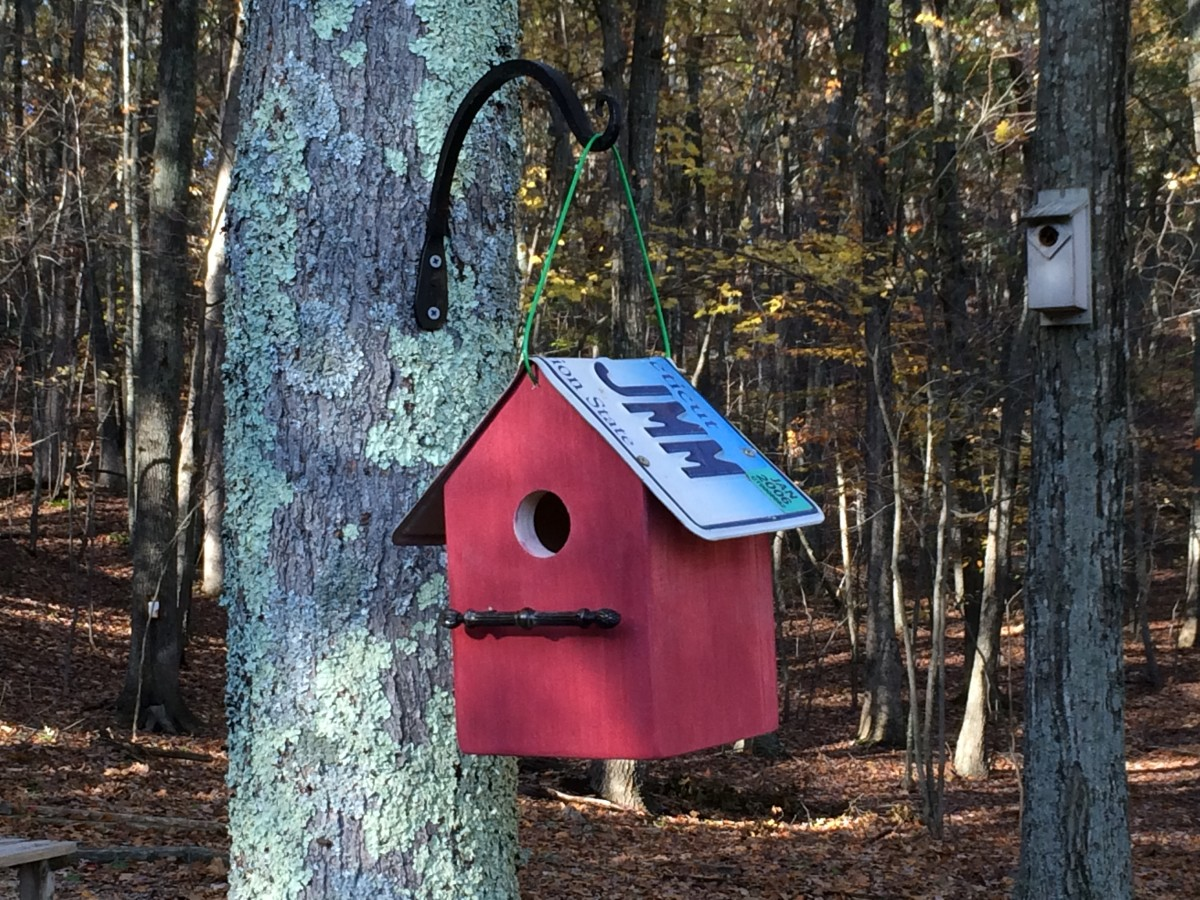 Bluebirds, wrens, chickadees and owls will move into a birdhouse