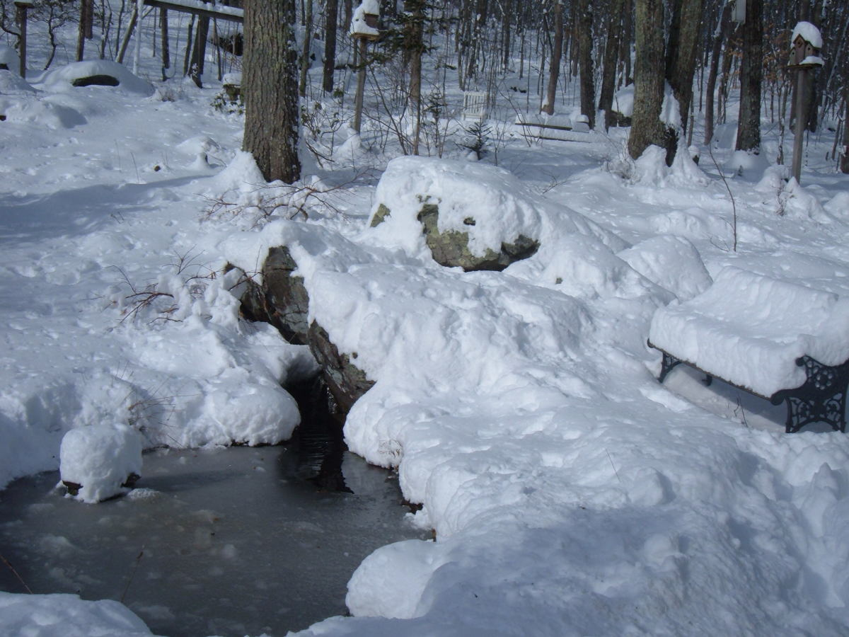 The fish are safe under the snow and ice covered pond.