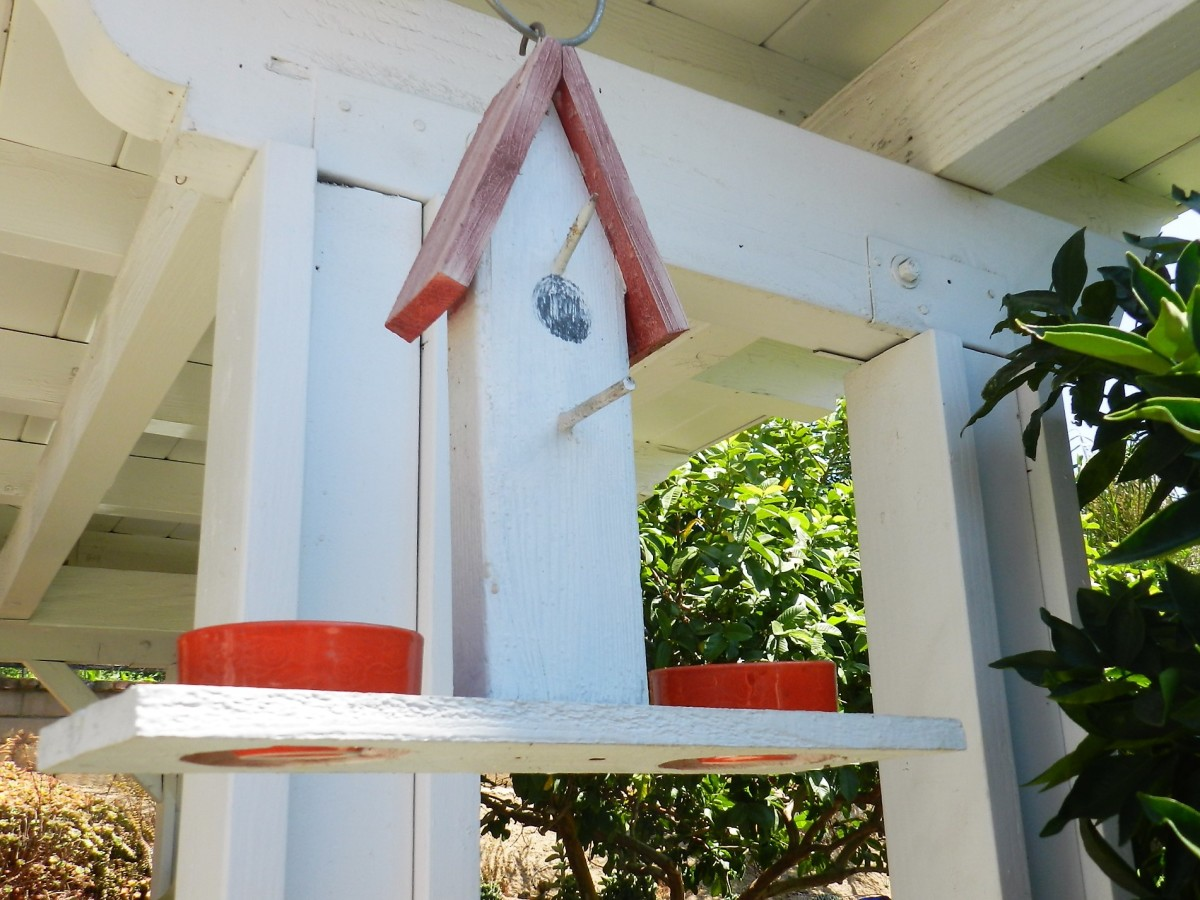 Dishes for grape jelly. Feeder made from scrap wood.