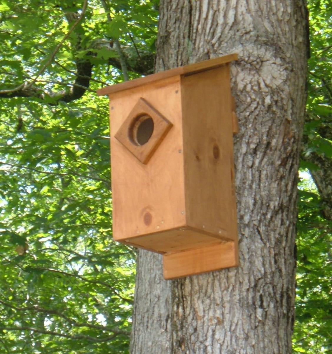 Screech owl house plans how to build a screech owl box for How to build your own house in florida