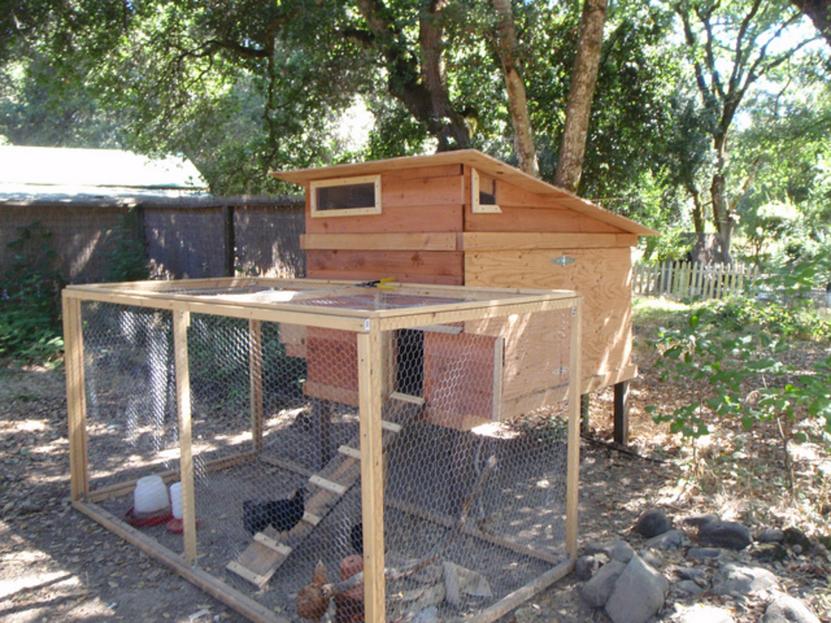 Backyard Chicken Coop Plans