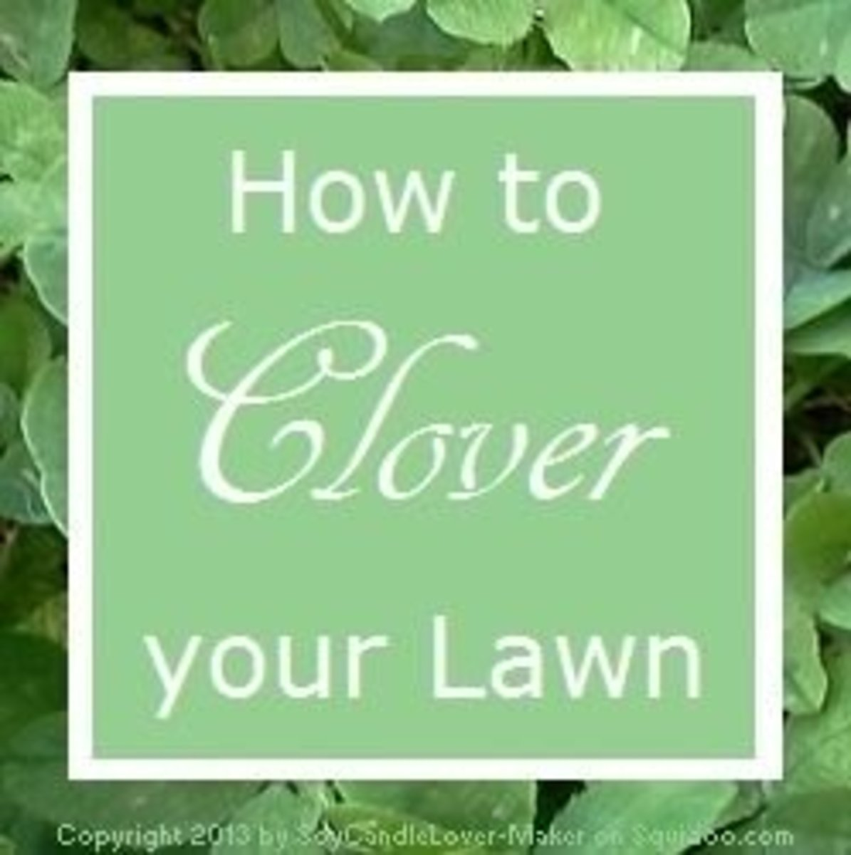 How to Clover your Lawn
