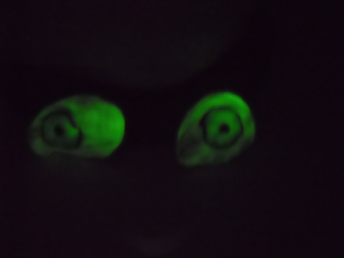 Glow-in-the-Dark Eyes for Halloween