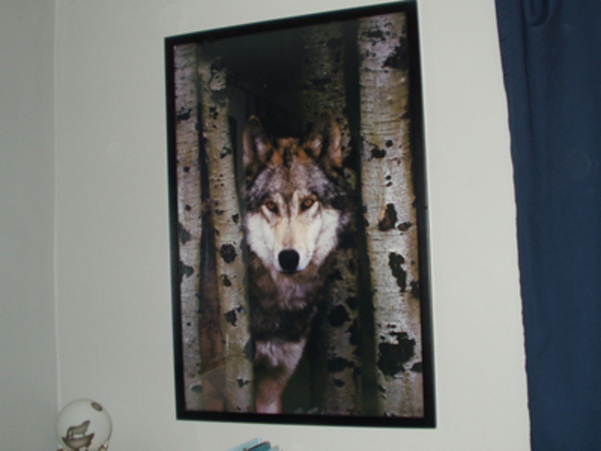 Posters are an inexpensive and easy decorating idea. This poster of a wolf and birch trees is over the desk.