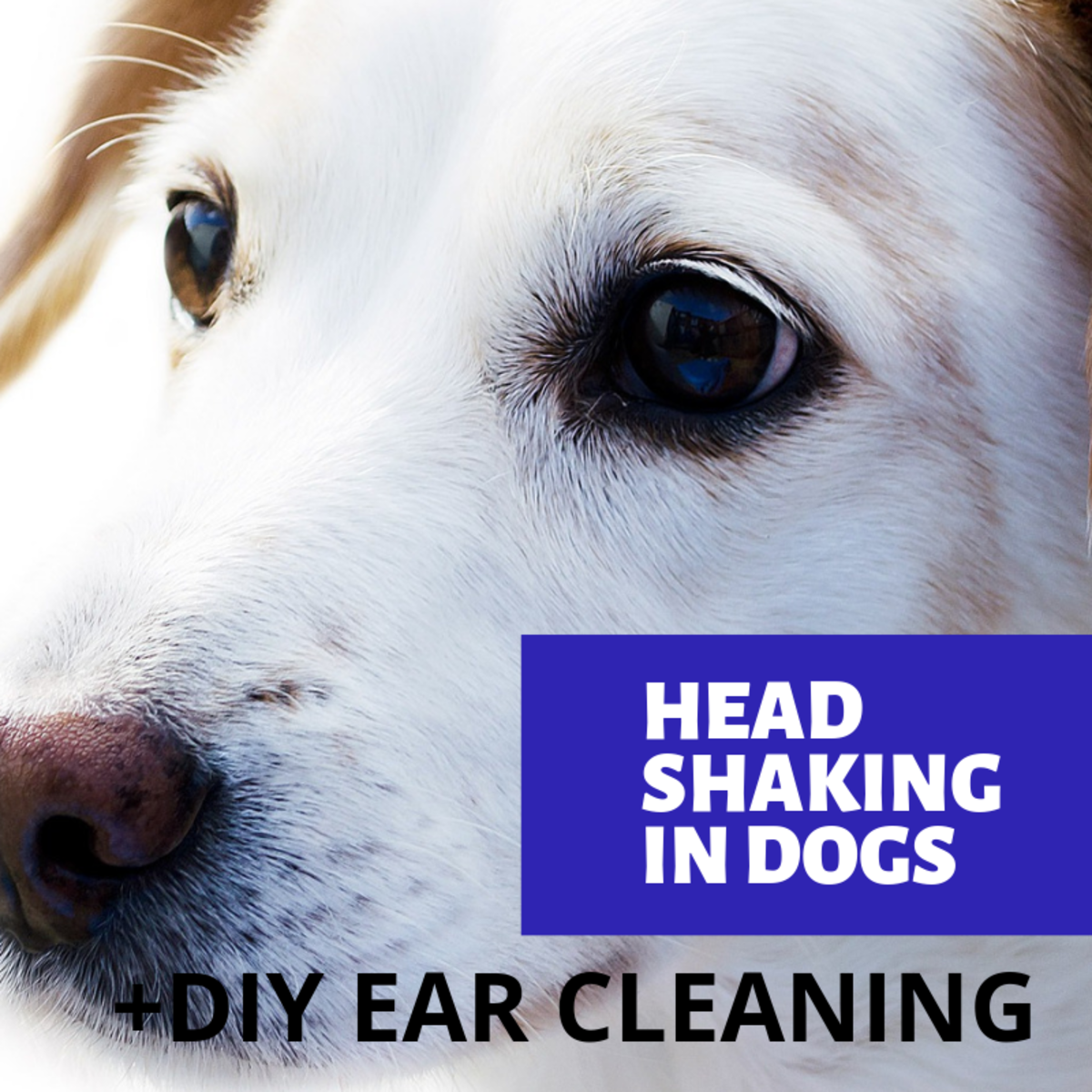 Why is your dog shaking its head?