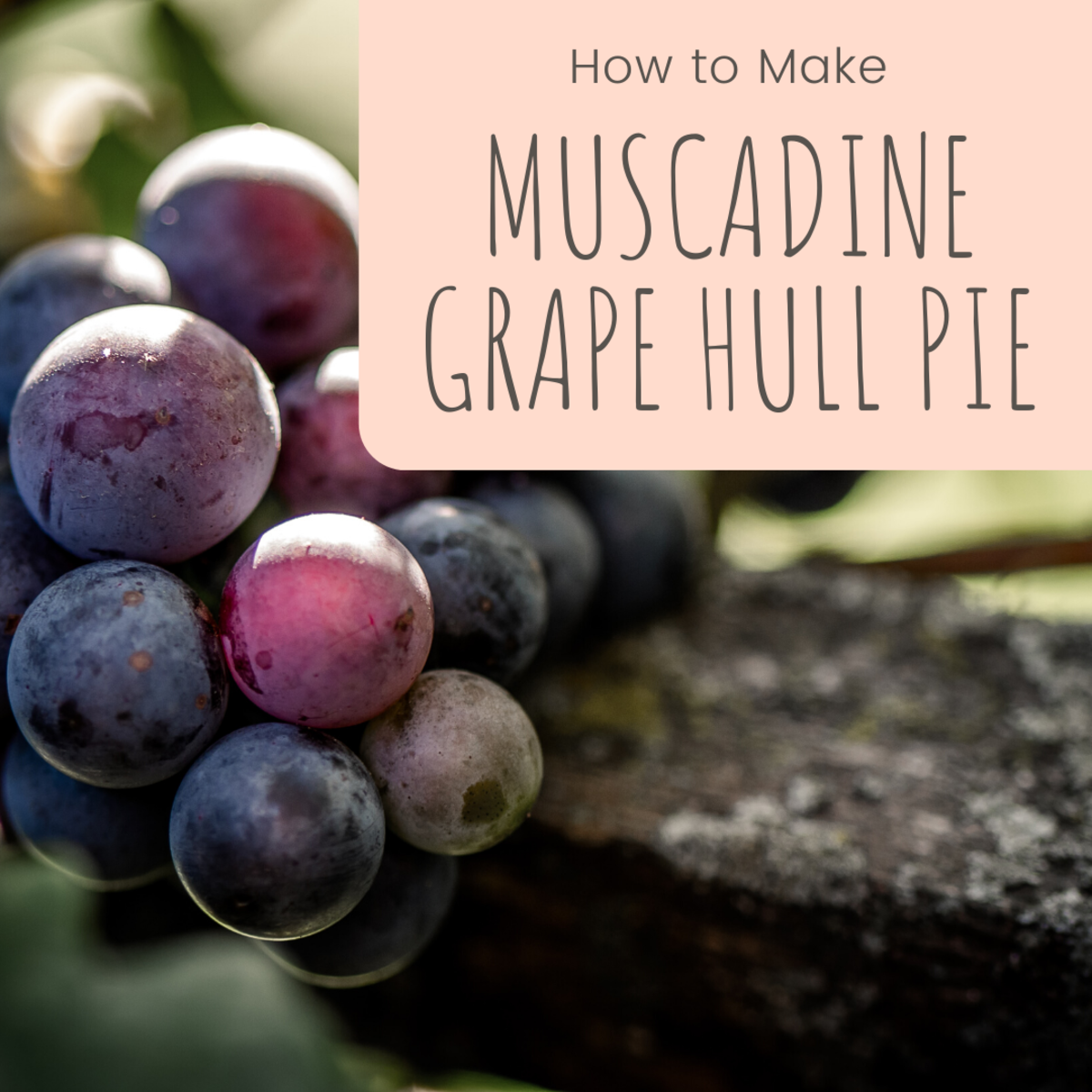 Muscadine Grape Hull Pie