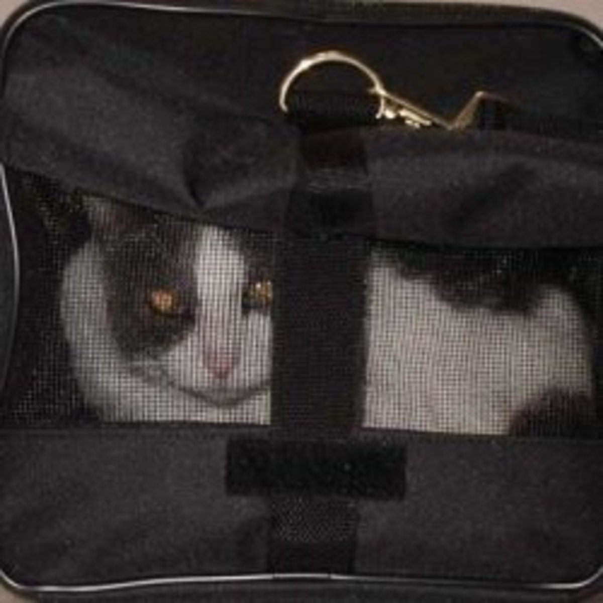 Review: My Favorite Airline-Approved Cat Carrier