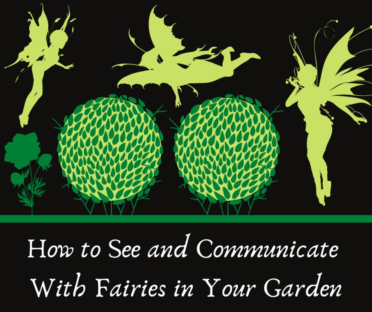 How to See and Communicate With Fairies in Your Garden