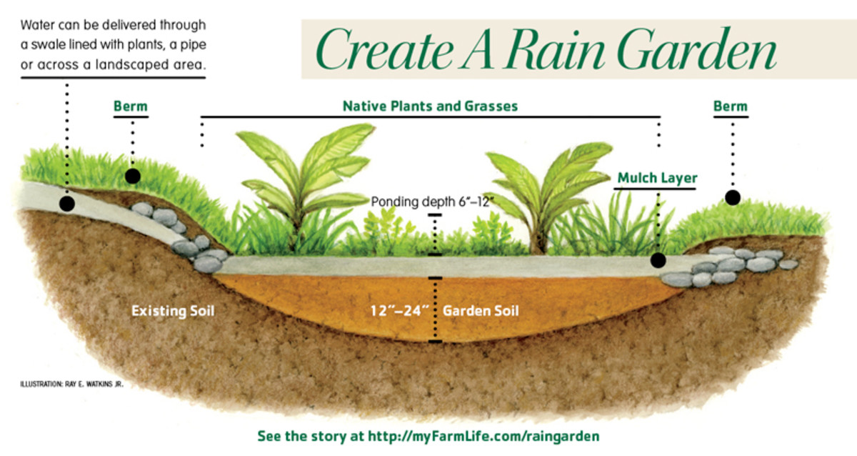 A narrow low channel in the yard guides rainwater to the rain garden.