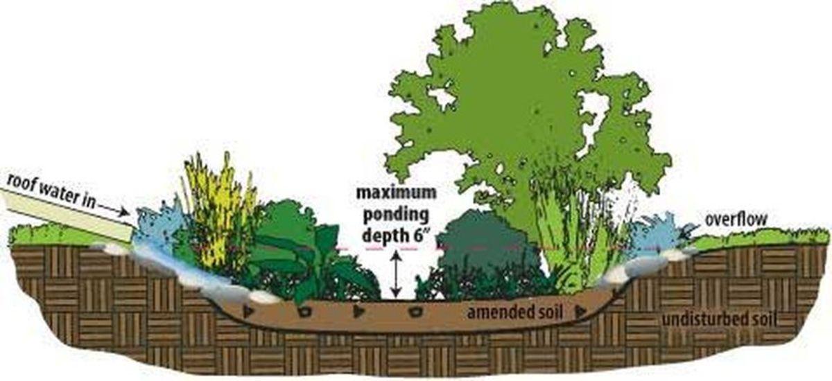 how-to-make-a-rain-garden-good-for-the-earth