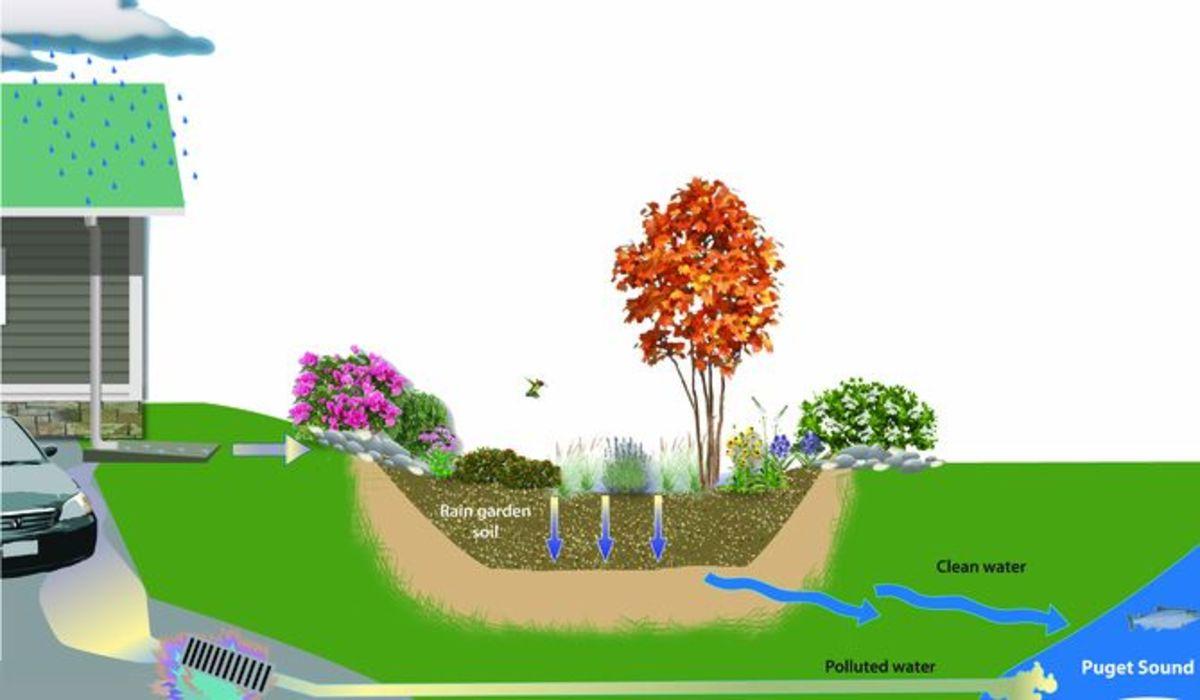 Good for the Earth: How to Make a Rain Garden