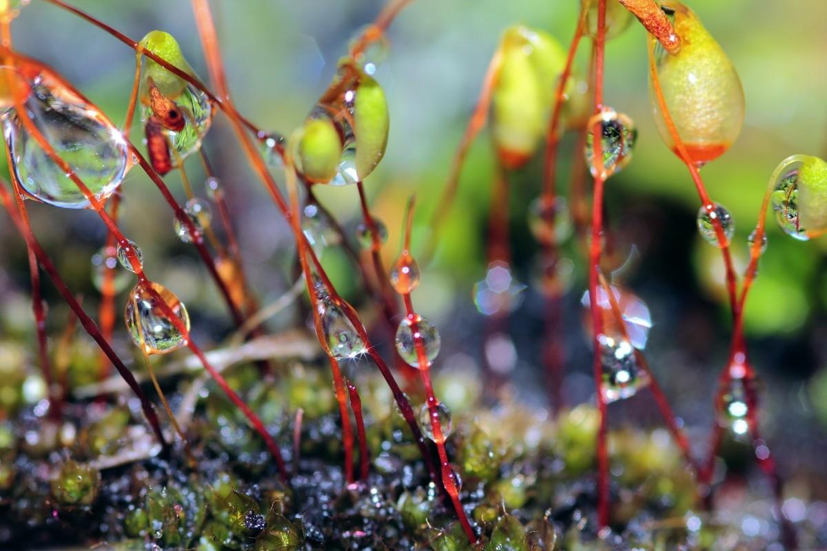 A rain garden encourages the rain to tarry.