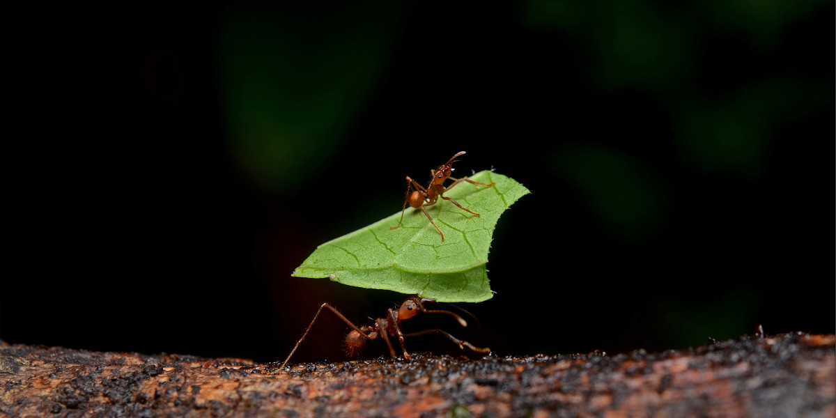 Ants are good for photography but not for your home!