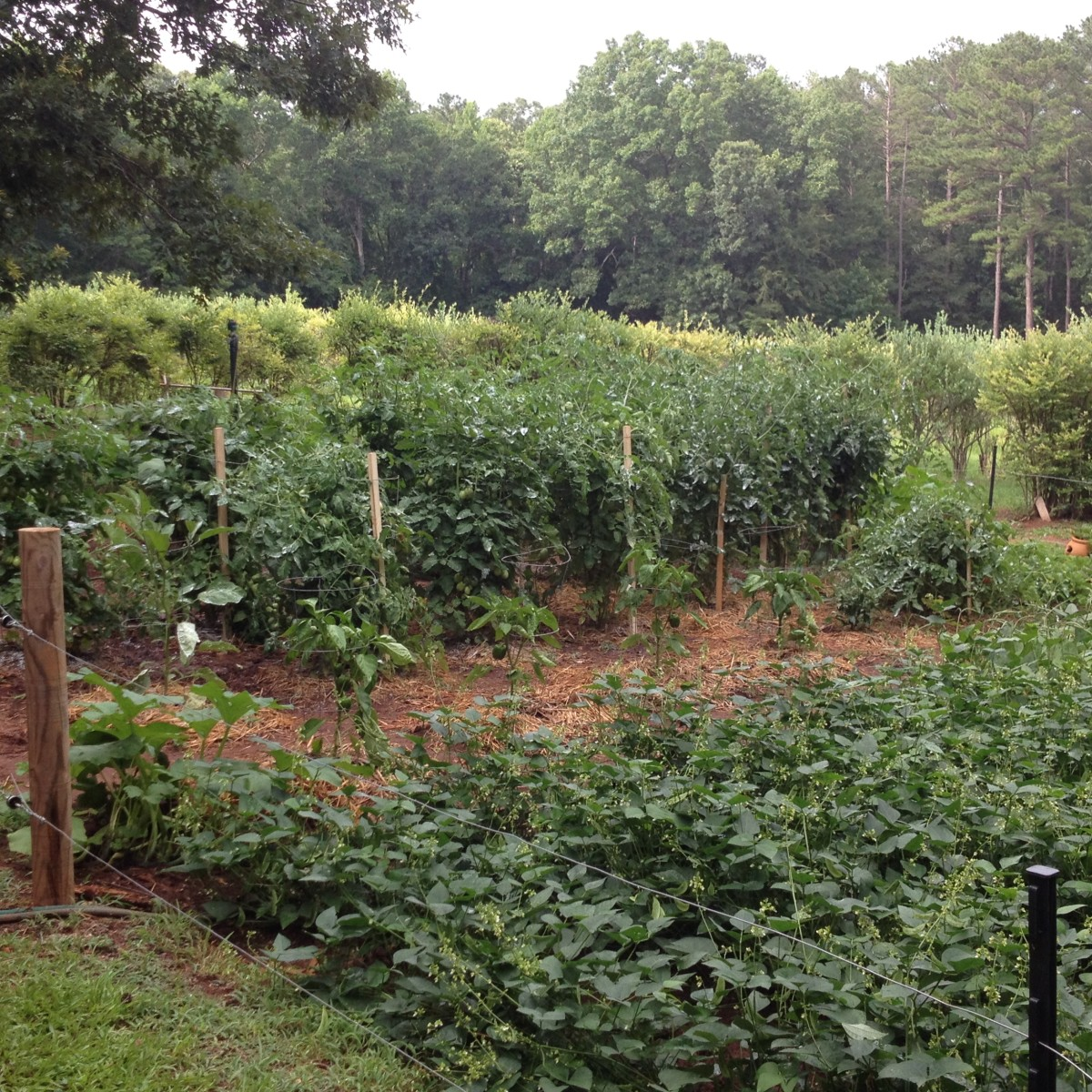 Thanksgiving Dinner: Preparing for That Special Meal While Summer Gardening