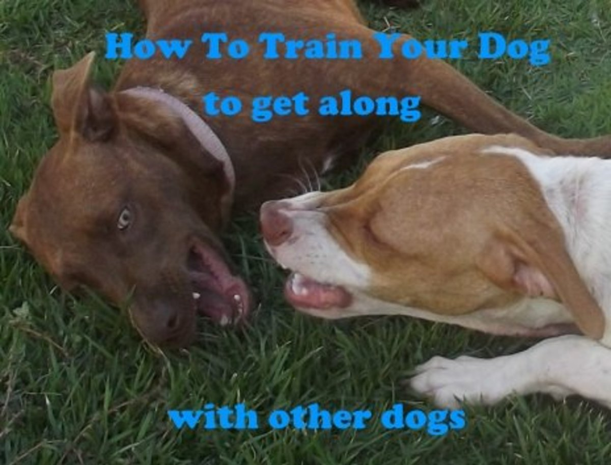 You can train your dog to get along with other dogs.