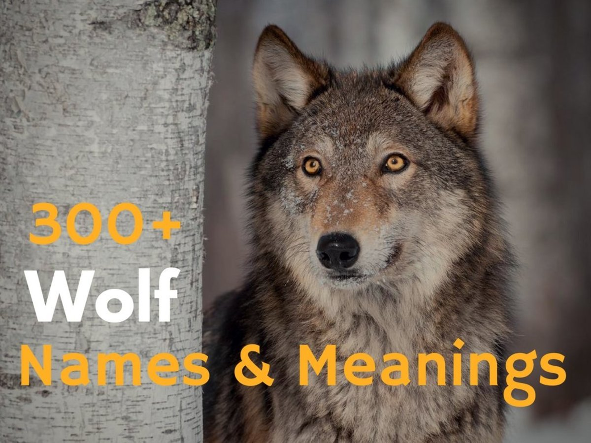 Female Dog Names Meaning Wolf