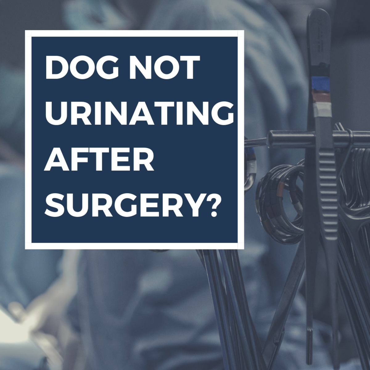 Why Is My Dog Not Peeing After Surgery?